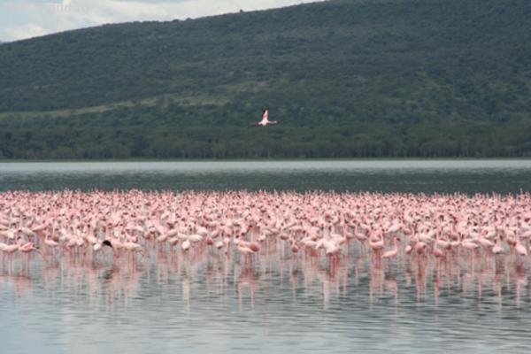 Вот где действительно много фламинго!
