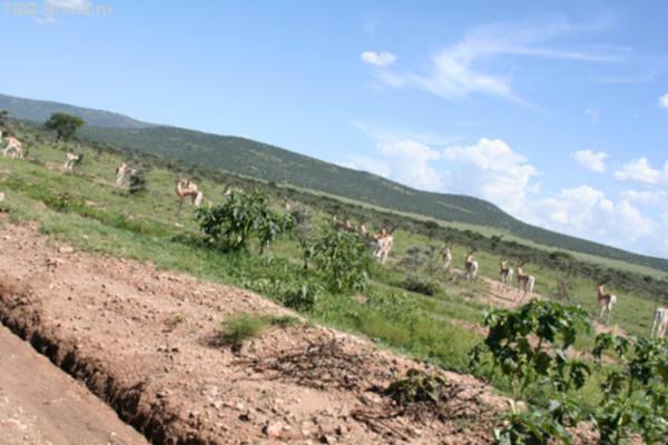 Стада самых разных копытных стали встречаться нам задолго до въезда на территорию заповедника.