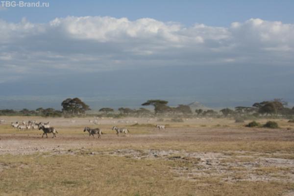 Были зебры...