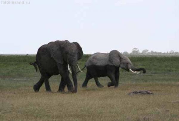 Искупавшиеся слоники