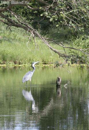 Озеро серых цапель