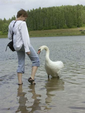 А кого еще кусали лебеди? ;о)