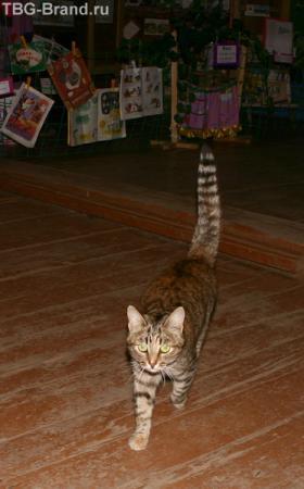 Дежурный кот