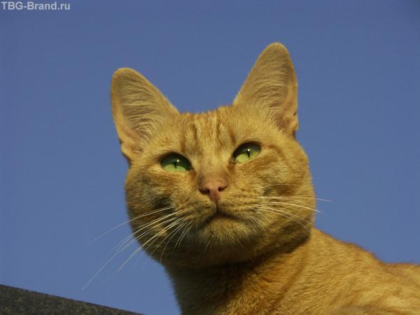 Солнечный кот с солнышком в глазах