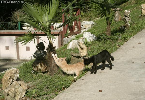Мечта любого кота - пальмовая когтеточка!