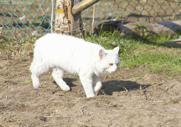 Просто кот :о)