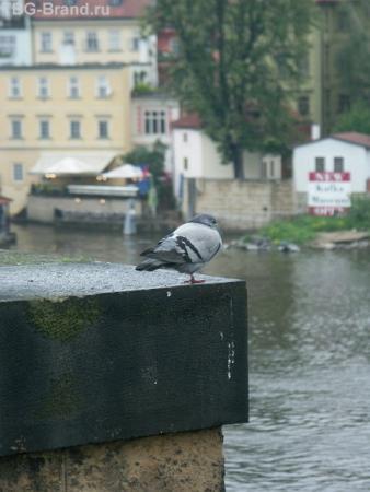 Змерзла птичка :(