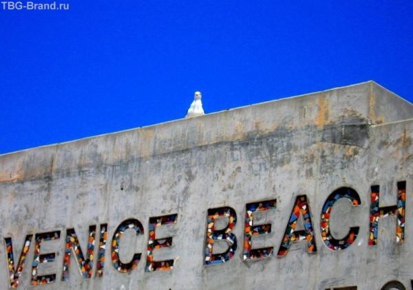 На океан смотрела птица...