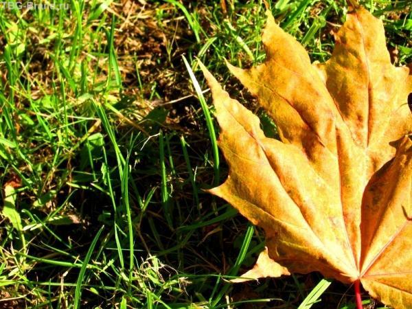 Как осень на ладони