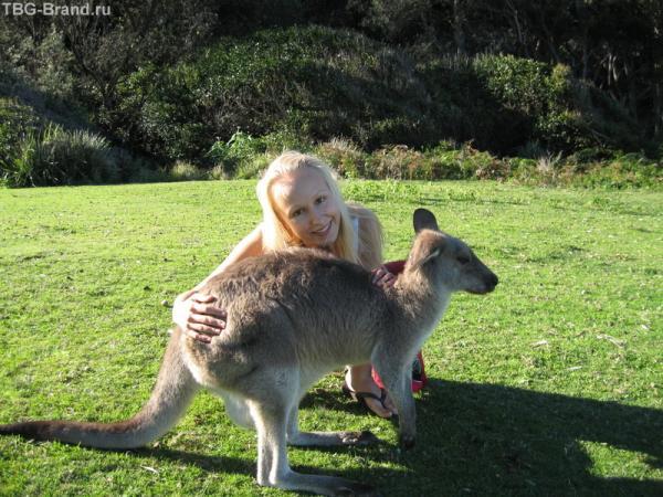 Pabbly beach, кенгуру