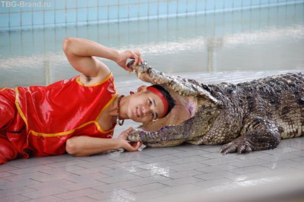 в пасти у крокодила
