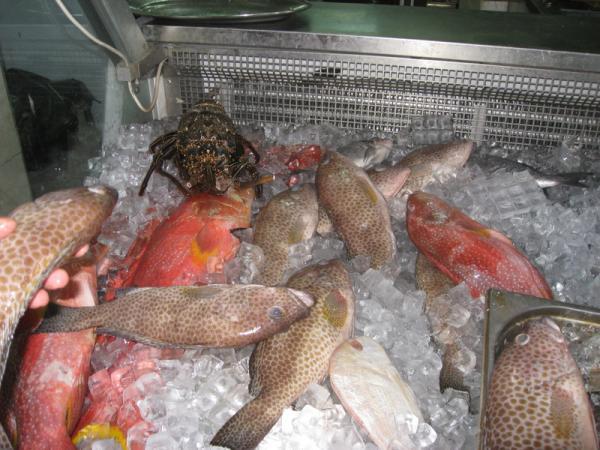 Пятнистая, это рыба дорадо. Ну очень вкусная!