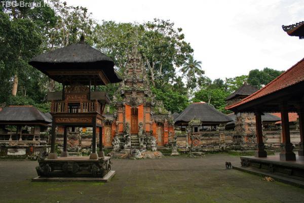 храм в обезьяньем лесу