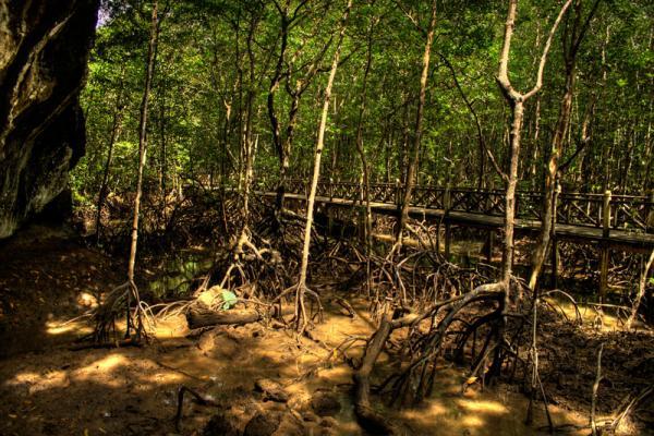 мангровые заросли... мостик