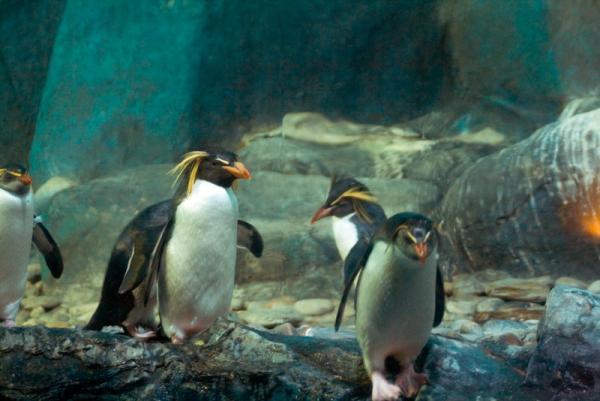 океанариум... пингвины