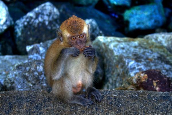 обезьянка...