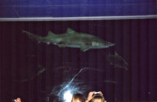 призрак аквариума