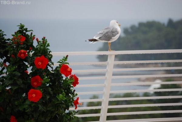 чайка под дождем