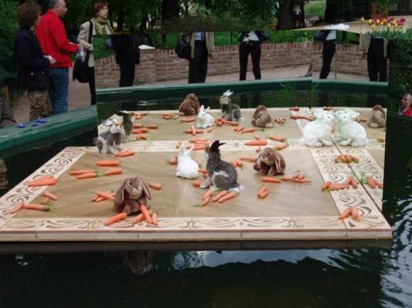 кролики в огороде на паркете