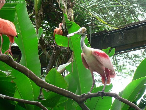 Парк птиц на Бали (рекомендую)