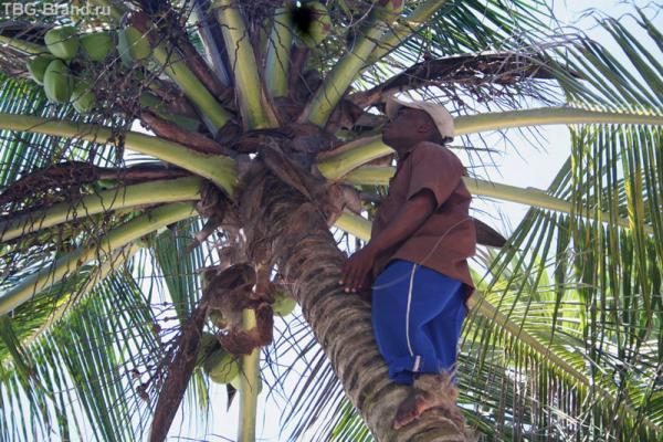 кокос для нас