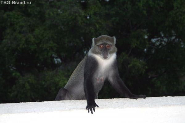мартышка в гостях на балконе