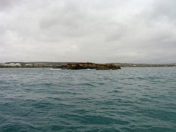 остров котиков (пока без запаха)