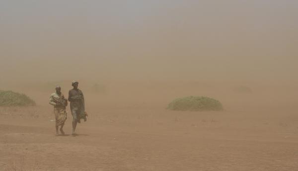 По пустыне бредут верблюдЫ...в никудЫ...