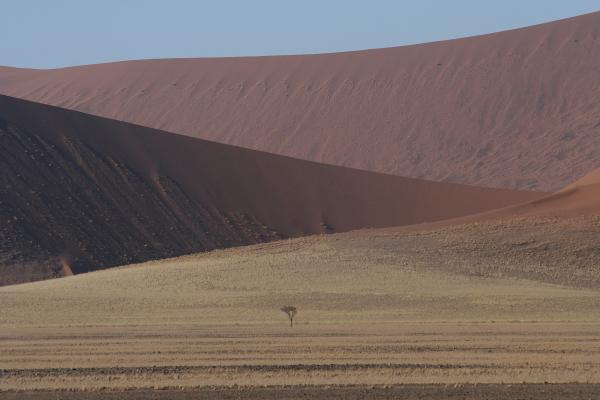 Геометрия пустыни