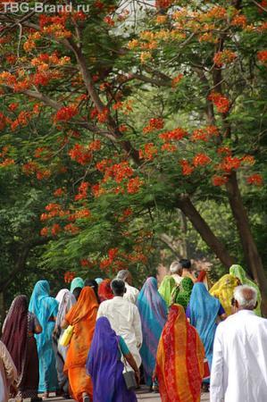 Цвет общества на экскурсии в Тадж Махале