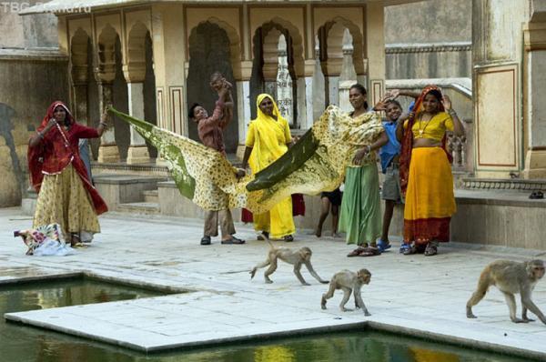 Женщины в храме обезян в Джайпуре