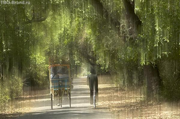 Птичий заповедник... Жара плавит даже воздух... При движении рикши воздух обжигает лицо... Мы забыли взять с собой воду. Но из колодца пить не стали.)