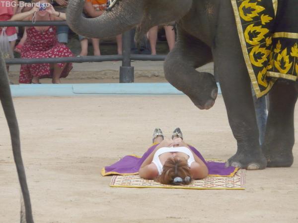 Нонг нуч, шоу слонов