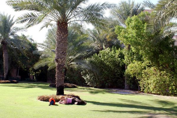 лежу под пальмой