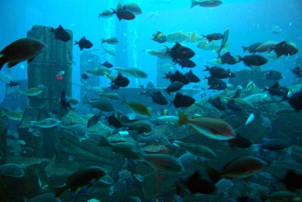 рыбки Атлантиса