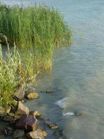 Воды Балатона.