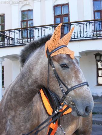 А я конь, просто конь!