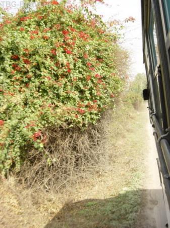 цветущие склоны Гималаев