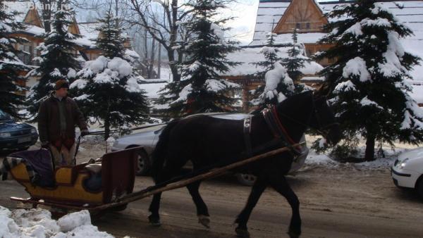 Вот такой вот транспорт