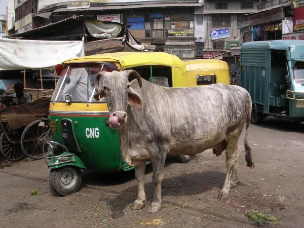 Горожанка. (Индия, Дели)