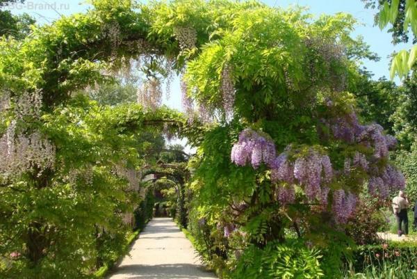 Цветущая аркада
