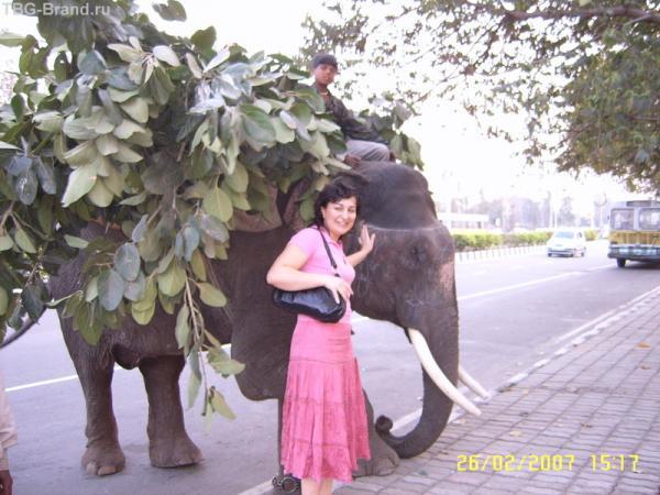 У слоника,Дели