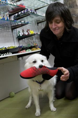 Подвижные игры с собакой в магазине стекла