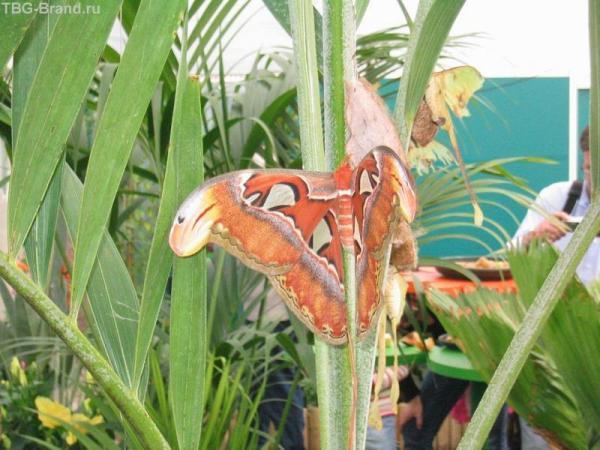 Внутри павильона с бабочками