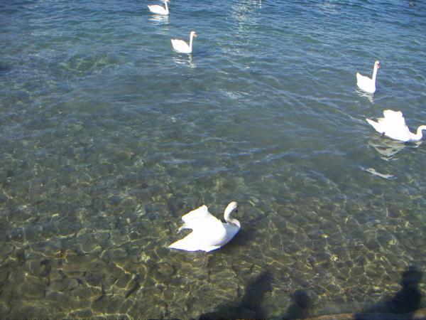 Люцерн, озеро