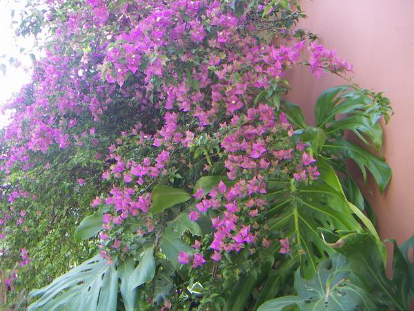 Цветы в парке отеля