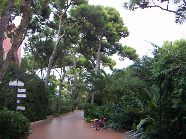 Дорожки в парке