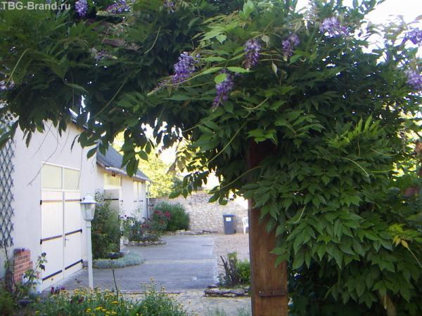 возле дома очень много цветов