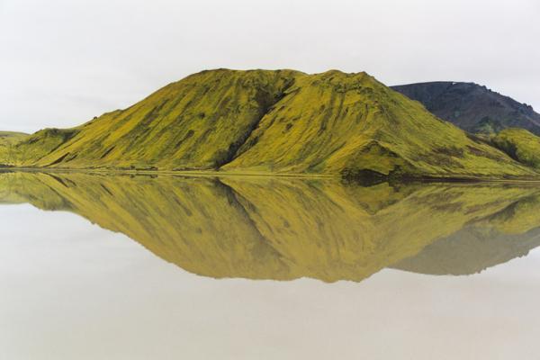 Великолепный мох на горах