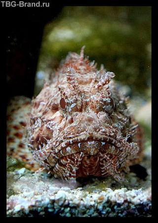 Житель аквариума в городе Пореч